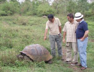 Especie terrestre de tortuga